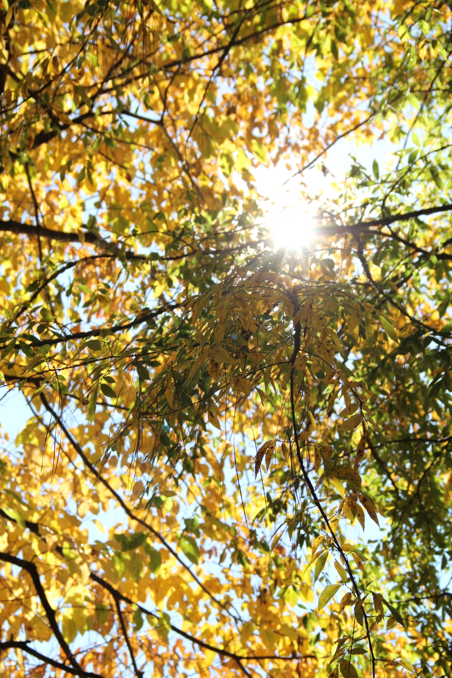 Fall Leaves and Sunshine